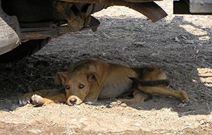 Dog in shade