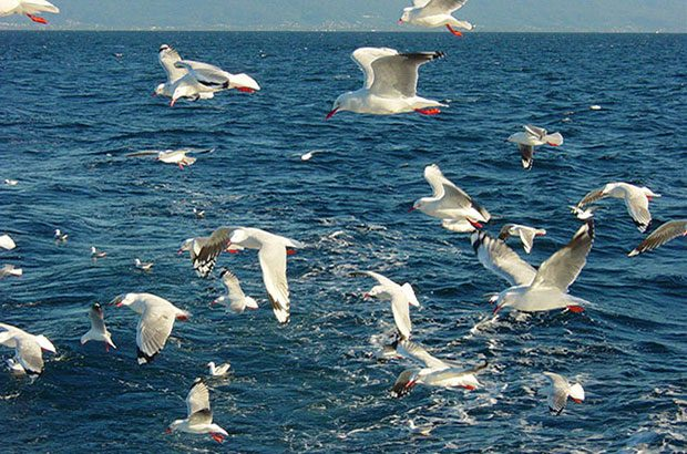 Image of birds at sea