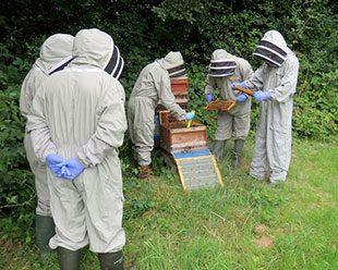 Witnessing the hive inspection procedure
