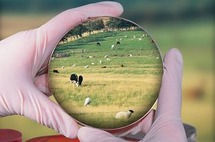 Photo of hands holding a petri dish focussed on farm animals
