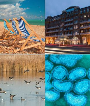 Photo collage of 4 photos: deckchairs, hotel, ducks landing on a lake and close of avian influenza