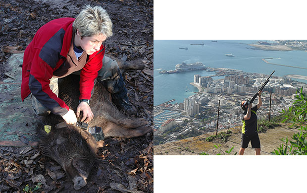 Photos of Julia Coats kneeling over a wild boar with a collar and tags and aiming a dart gun with a coastal city-scape behind.