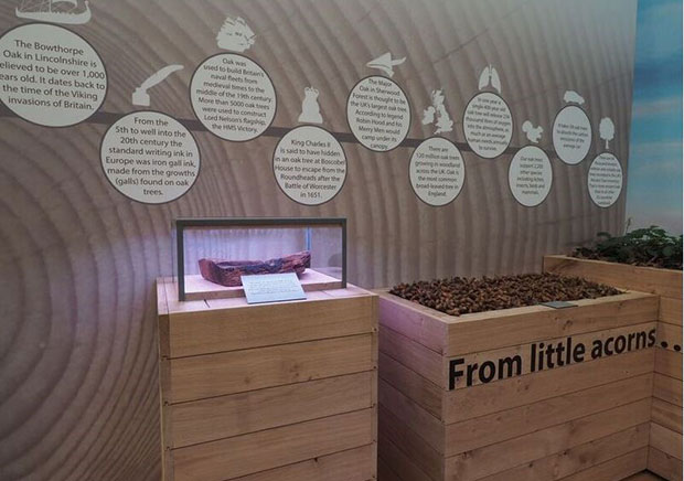 Display of oak from HMS Victory with a sign saying 'from little acorns ...'