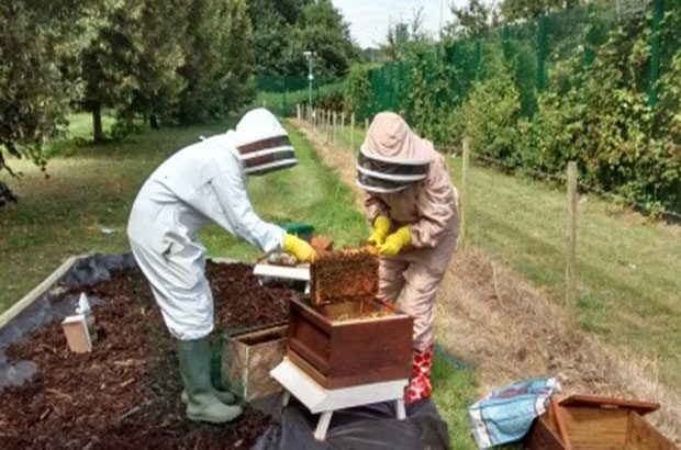 Mark Thomas and Sue Bonsor inspecting one of the bee hives