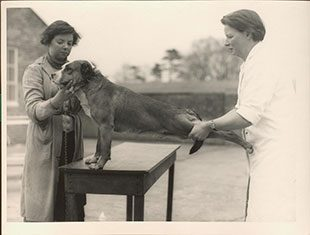 Image of Annie Littlejohn inspecting a dog which is standing on a table.
