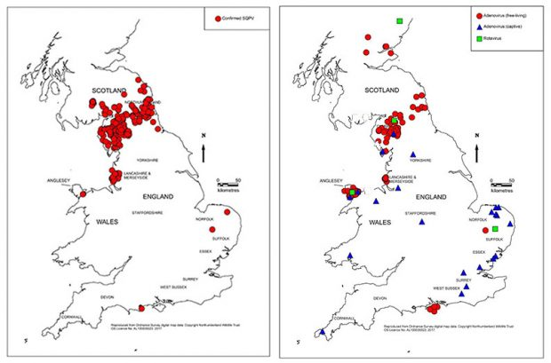 Two line maps of the United Kingdom for illustrative purposes showing a higher density of red circles across the Scottish/English border in the left and a lower density in the right. The image to the right has a large cluster of blue triangles across East Anglia.