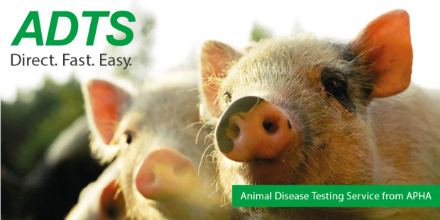 Two pigs in the background of an image saying, 'ADTS, Direct. Fast. Easy. Animal Disease Testing Service from APHA.'