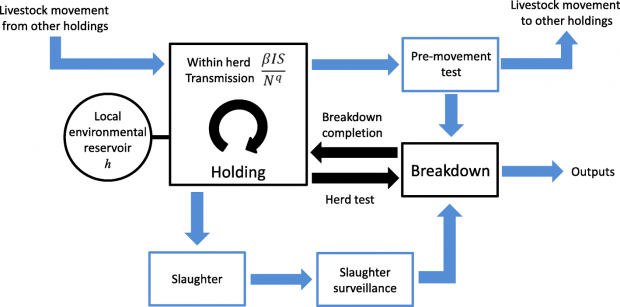 Flow diagram showing the Bovine Tuberculosis Model for England and Wales