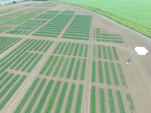 Aerial image of a field showing rows of crops