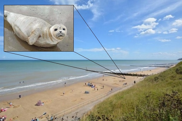 Image of a sunny beach with a secondary image of a grey coloured seal pup.