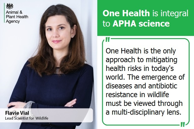 "Image of Flavie Vial, Lead Scientist for Wildlife. The image is entitled 'One Health is integral to APHA science. Below is a quote from Flavie, ""One Health is the only approach to mitigating health risks in today's world. The emergence of diseases in wildlife must be viewed through a multi-disciplinary lens."""