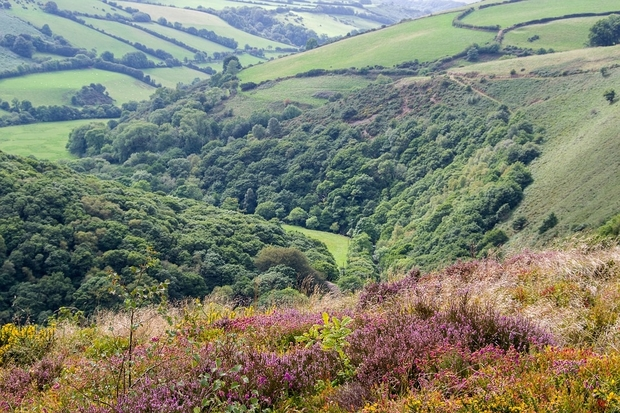 Image of an Exmoor landscape