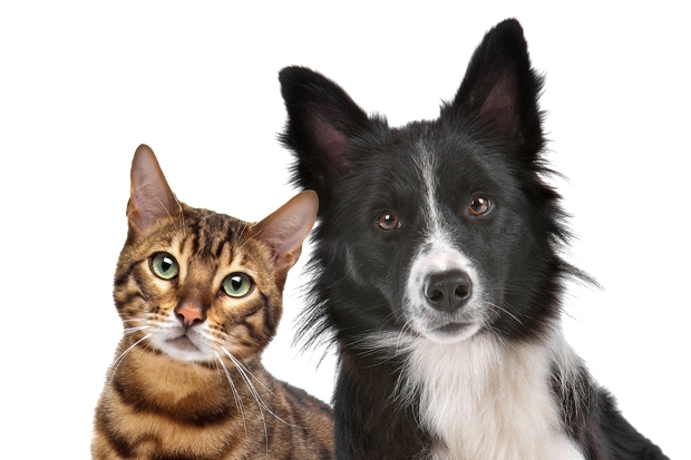 Image of a cat and a dog looking into the camera.