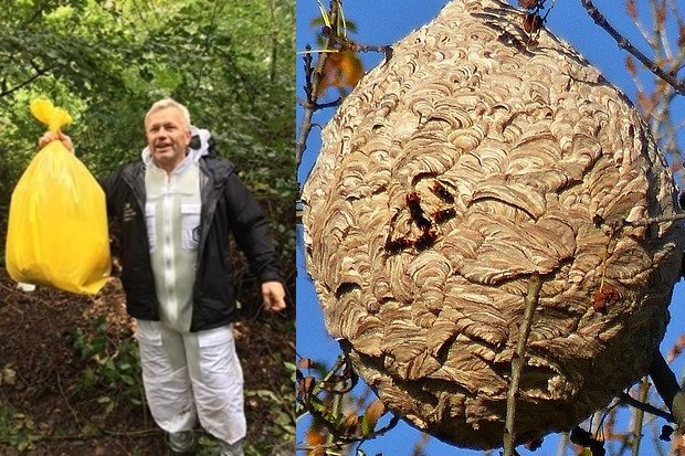 Image split in half. The left hand side is of a gentleman holding up a large yellow bag. The right is of an Asian hornet nest.