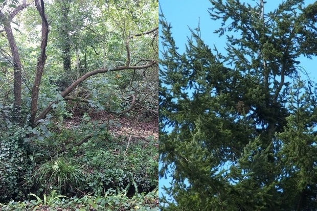 Image split in two. The one on the left hand side depicts a woodland floor and the image on the right depicts a treetop.