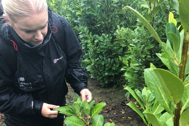 Image of Laura Chapman outside inspecting a plant's leaf