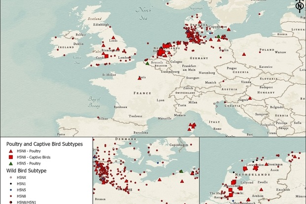 Image of a map of Europe indicating incidents of Avian influenza in poultry and captive bird species and wild birds. Clusters can be seen across Scandinavia and some in the UK