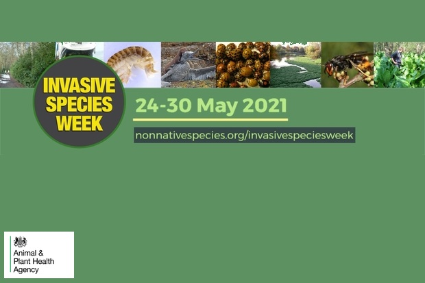 Feature image for Invasive Species Week 24th-30th May 2021. nonnativespecies.org/invasivespeciesweek with the APHA logo showing at the bottom.