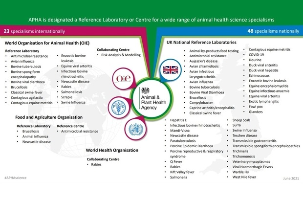 Diagram entitled, 'APHA is designated a Reference Laboratory or Centrre for a wide range of animal health science specialisms' of which there are 23 specialisms internationally and 48 nationally. World Organisation for Animal Health (OIE) reference laboratory for: antimicrobial resistance, avian influenza, bovine tuberculosis, bovine spongiform encephalopathy, bovine viral diarrhoea, brucellosis, classical swine fever, contagious agalactia, contagious equine metritis, enzootic bovine leukosis, equine viral arteritis, infectious bovine phinotracheitis, Newcastle disease, Rabies, scrapie and swine influenza; collaborating centre for risk analysis and modelling. Food and Agriculture Organisation reference laboratory for brucellosis, animal influenza and Newcastle disease and Reference Centre for antimicrobial resistance and a World Health Organisation Collaborating Centre for Rabies. APHA is also a UK National Reference Laboratory for: animal by-products feed testing, antimicrobial resistance, Aujeszky's disease, avian chlamydiosis, avian infectious laryngotracheitis, avian influenza, bovine tuberculosis, bovine viral diarrhoea, brucellosis, Campylobacter, caprine arthritis/encephalitis, classical swine fever, contagious equine metritis, COVID-19, dourine, duck viral enteritis, duck viral hepatitis, echinococcus, enzootic bovine leukosis, equine enceohalomyelitis, equine infectious anaemia, equine viral arteritis, exotic lymphangitis, fowl pox, glanders, hepatitis E, infectious bovine rhinotracheitis, maedi-visna, Newcastle disease paratuberculosis, porcine epidemic diarrhoea, porcine reproductive & respiratory syndrome, Q fever, sheep scab, surra, swine influenza, teschen disease, transmissible gastroenteritis, transmissible spongiform encephalopathies, trichinella, trichomonosis and veterinary mycoplasmas.