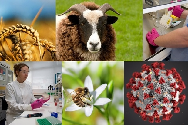 Image split into six sections: some wheat, a sheep, some laboratory worker's hands, a female laboratory scientist in a laboratory, a bee on a white flower and a COVID-19 atom