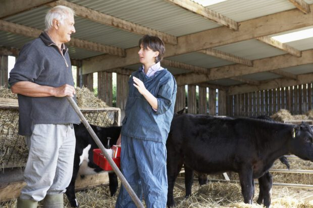 Vet talking to farmer in a barn with cows in the background