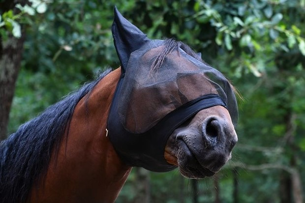 A horse wearing a protective mask designed to repel mosquitos and other flying insects