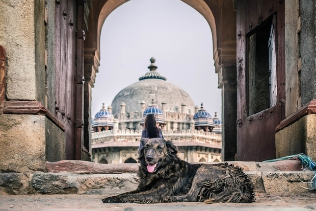 Image of a dark coloured dog laying down in front of an arch in-between buildings with a mosque in the background