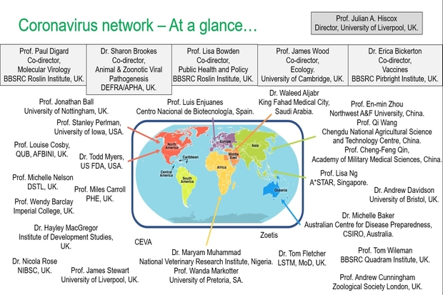 Image of a map of the world with names of those involved in the network surrounding it. The map is entitled Coronavirus network – At a glance. Names are: Prof. Julian A. Hiscox, Director, University of Liverpool, UK. Prof. Paul Digard, Co-director, Molecular Virology, BBSRC Roslin Institute, UK. Dr. Sharon Brookes, Co-director, Animal & Zoonotic Viral Pathogenesis, DEFRA/APHA, UK. Prof. Lisa Bowden, Co-director, Public Health and Policy, BBSRC Roslin Institute, UK. Prof. James Wood, Co-director, Ecology, University of Cambridge, UK. Dr. Erica Bickerton, Co-director, Vaccines, BBSRC Pirbright Institute, UK. Prof. Jonathan Ball, University of Nottingham, UK. Prof. Luis Enjuanes, Centro Nacional de Biotecnología, Spain. Dr. Waleed Aljabr, King Fahad Medical City, Saudi Arabia. Prof. En-min Zhou, Northwest A&F University, China. Prof. Qi Wang, Chengdu National Agricultural Science and Technology Centre, China. Prof. Cheng-Feng Qin, Academy of Military Medical Sciences, China. Prof. Lisa Ng, A*STAR, Singapore. Dr. Andrew Davidson, University of Bristol, UK. Michelle Baker, Australian Centre for Disease Preparedness, CSIRO, Australia. Prof. Tom Wileman, BBSRC Quadram Institute, UK. Prof. Andrew Cunningham, Zoological Society London, UK. Dr. Tom Fletcher, LSTM, MoD, UK. Zoetis. Dr. Maryam Muhammad, National Veterinary Research Institute, Nigeria. Prof. Wanda Markotter, University of Pretoria, SA. CEVA. Prof. James Stewart, University of Liverpool, UK. Dr. Nicola Rose, NIBSC, UK. Dr. Hayley MacGregor, Institute of Development Studies, UK. Prof. Wendy Barclay, Imperial College, UK. Prof. Miles Carroll, PHE, UK. Prof. Michelle Nelson, DSTL, UK. Dr. Todd Myers, US FDA, USA. Prof. Louise Cosby, QUB, AFBINI, UK. Prof. Stanley Perlman,University of Iowa, USA.